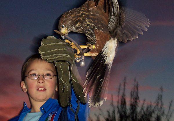 Family Falconry Experience