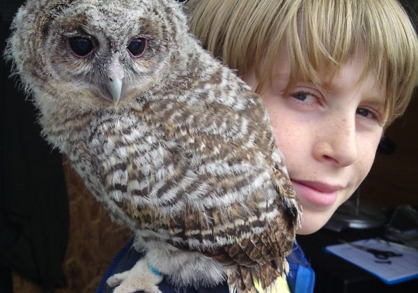 Junior Falconry Day