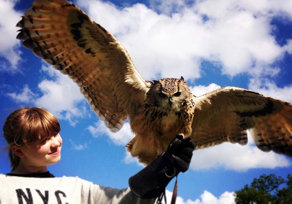Girl holding Eagle Owl