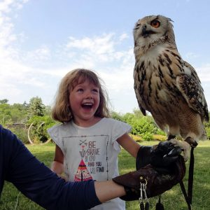 Falconer helping child hold Indian Eagle Owl