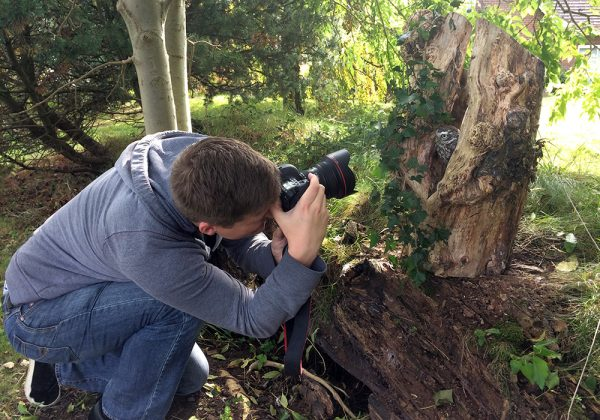 Man taking photo of Little Owl in tree stump hollow
