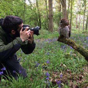 Man taking photo of Tawny Owl in bluebells