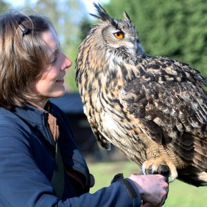 Falconer holding European Eagle Owl