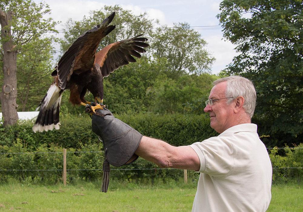 Customer with Harris Hawk in field