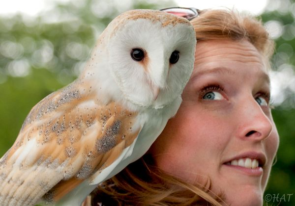 Falconer with Barn Owl