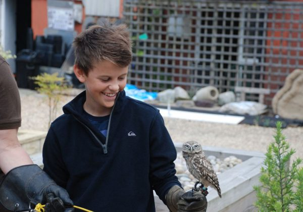 Boy holding Little Owl