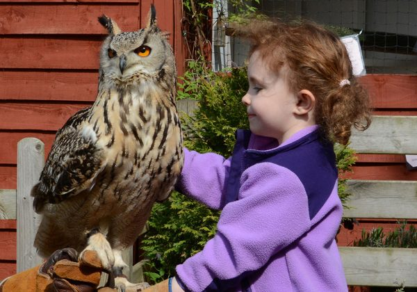 Birthday Party at Feathers and Fur Falconry Centre