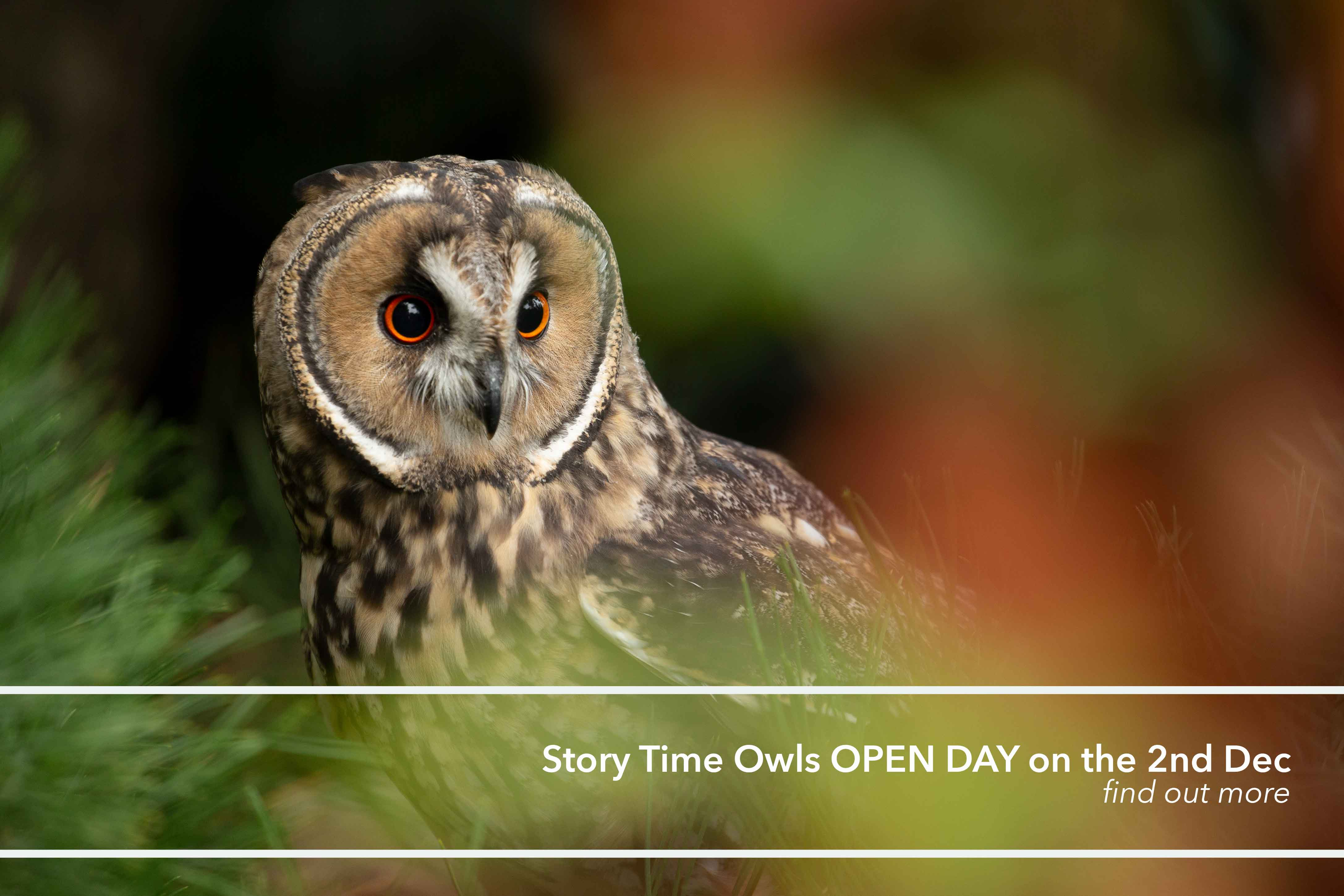 Owl open day