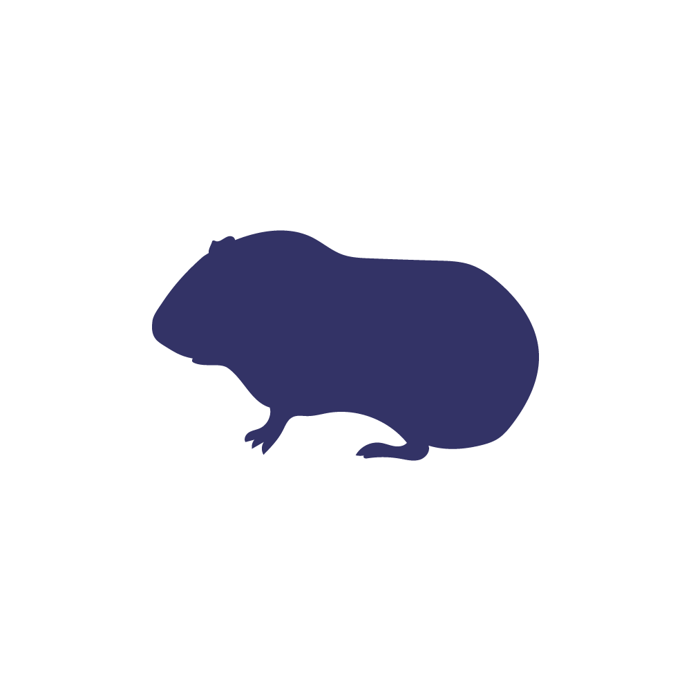 Frozen guinea pig