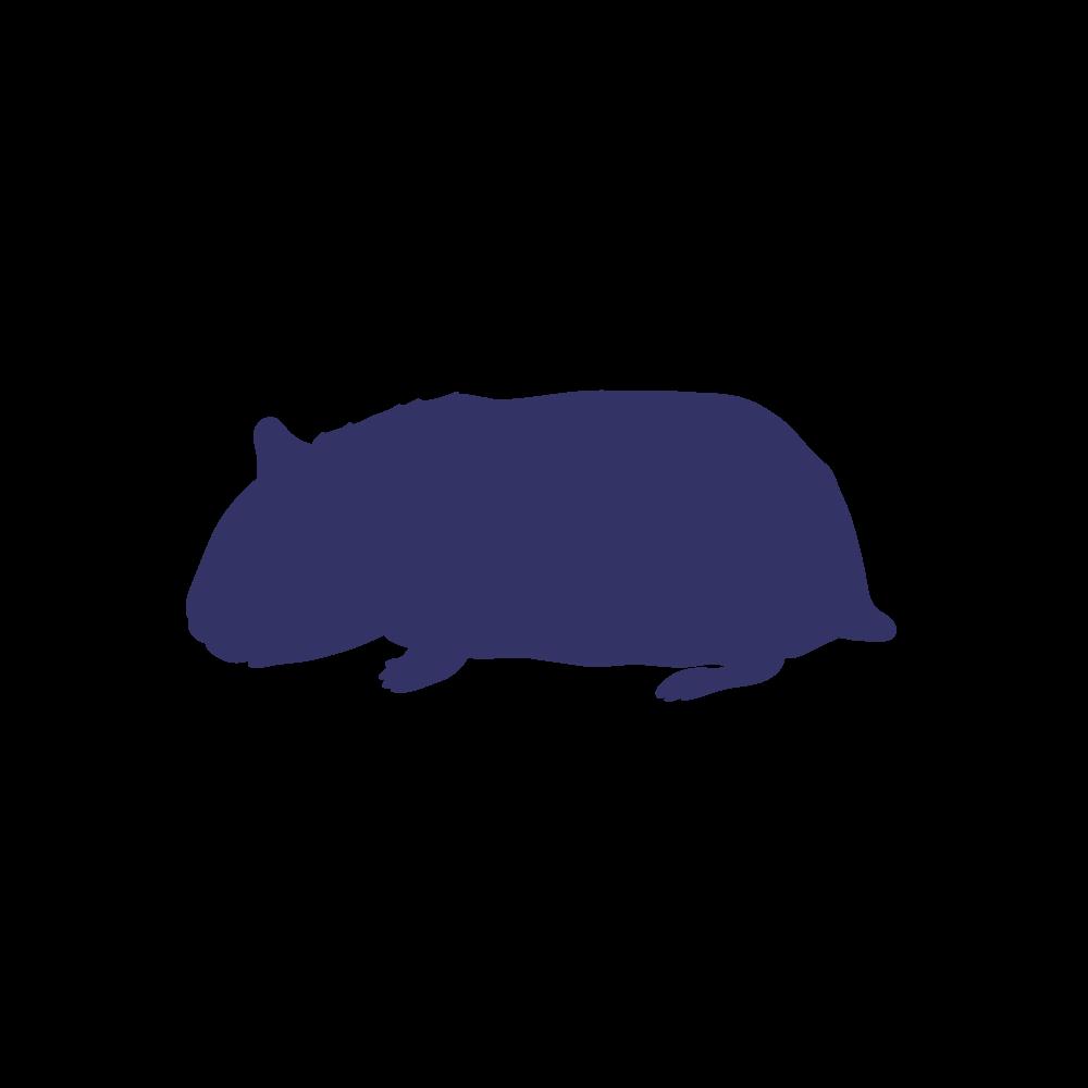 Frozen hamster